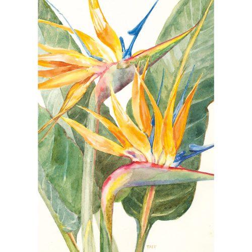 The Tait Florilegium folding notecard