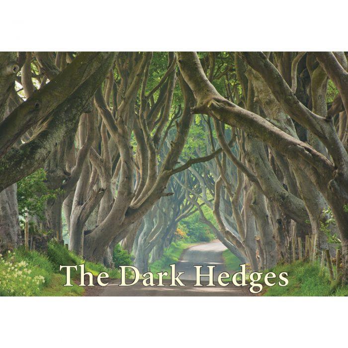 The Dark Hedges fridge magnet